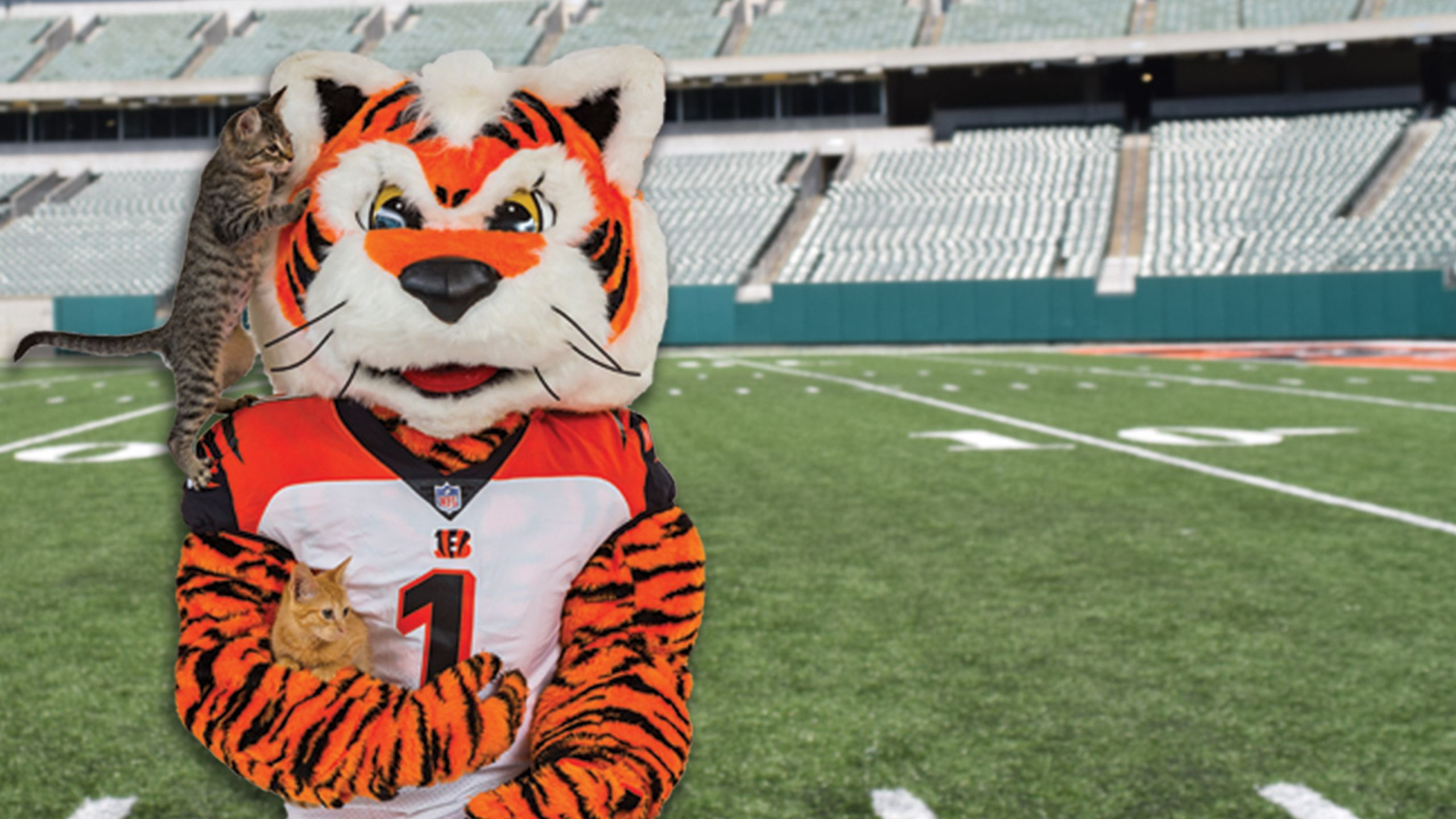 Adopt A Mini Who Dey