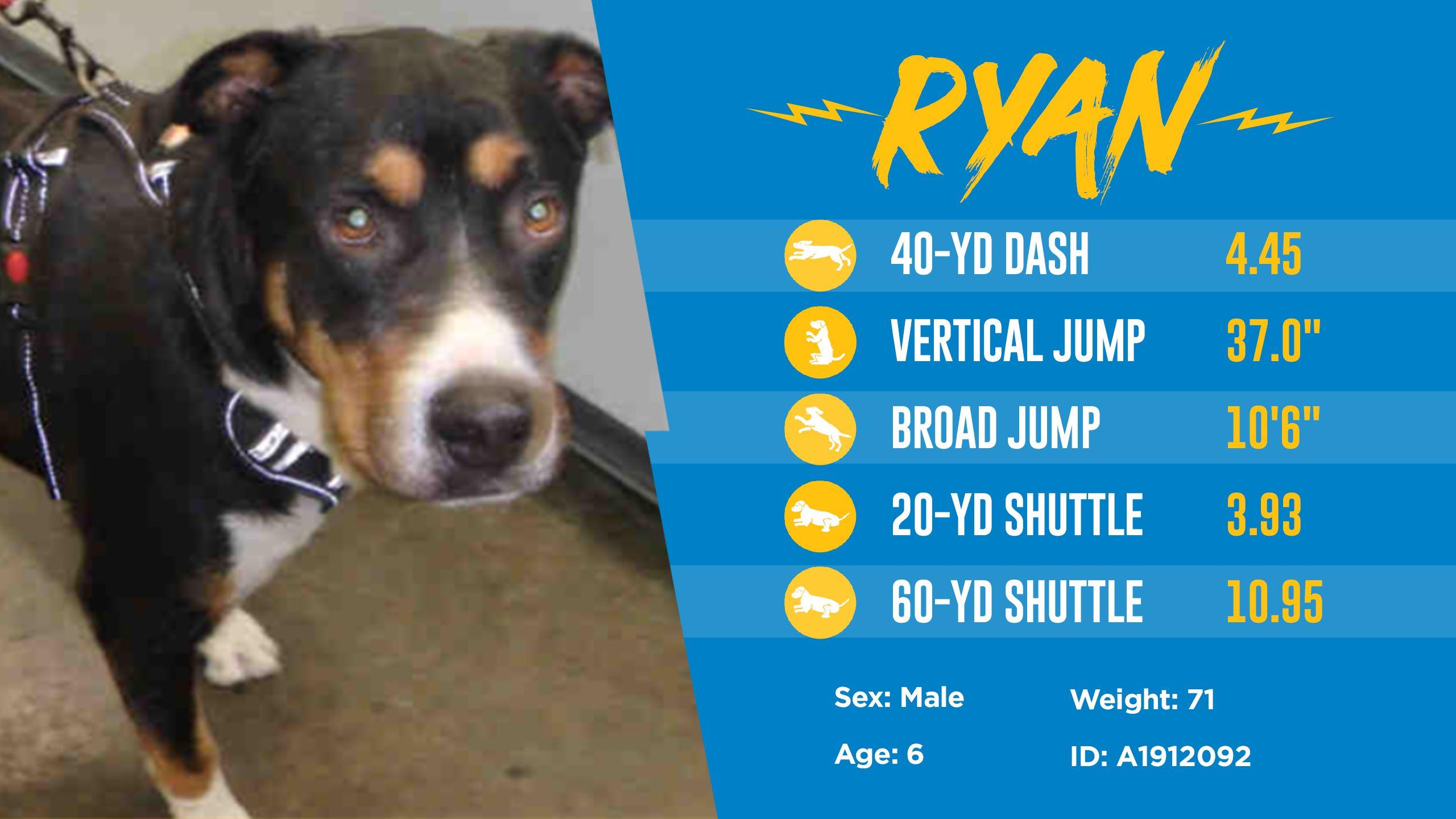 200501_Dog_Draft_Thumbnail_Ryan