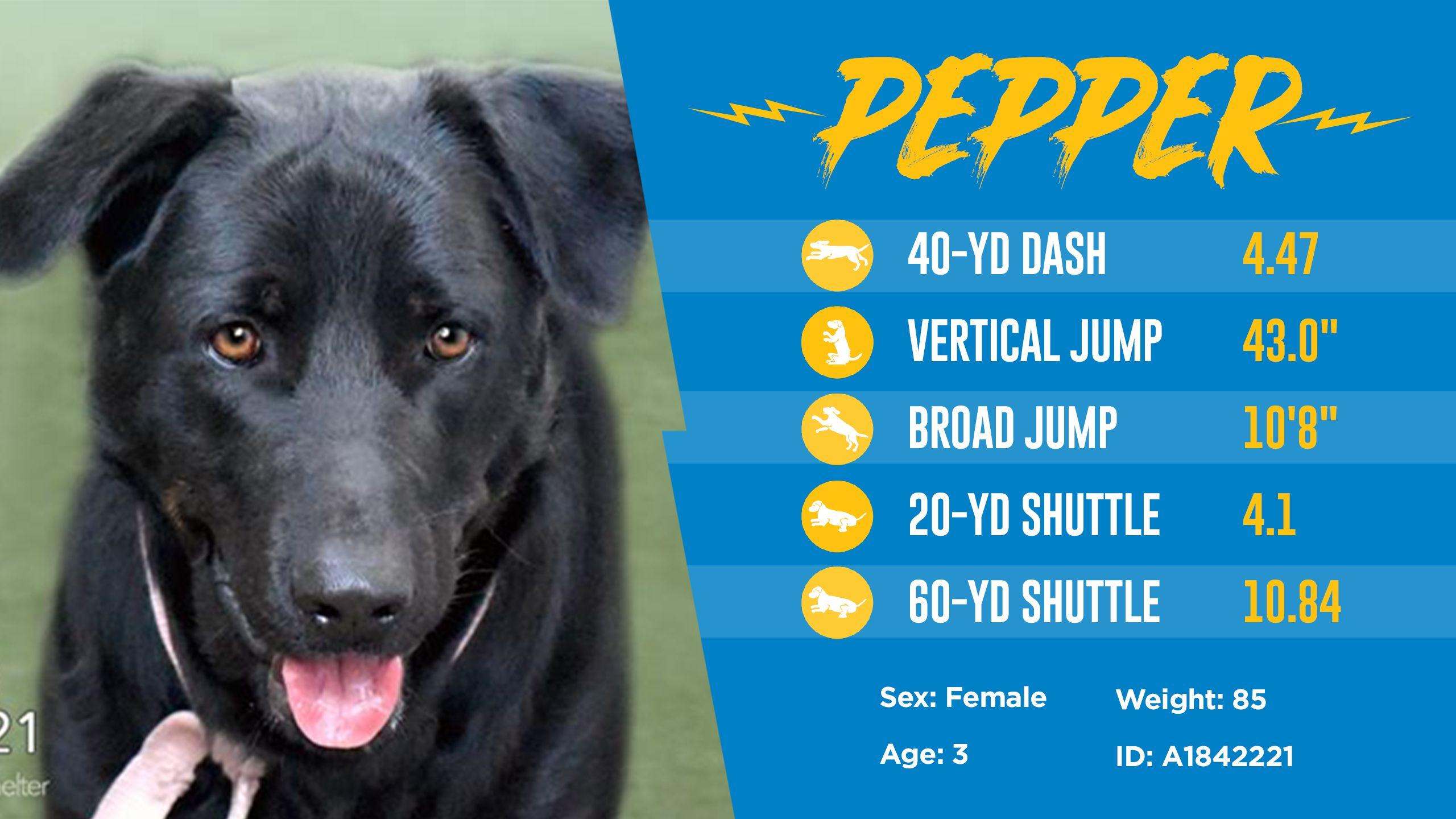 200501_Dog_Draft_Thumbnail_Pepper