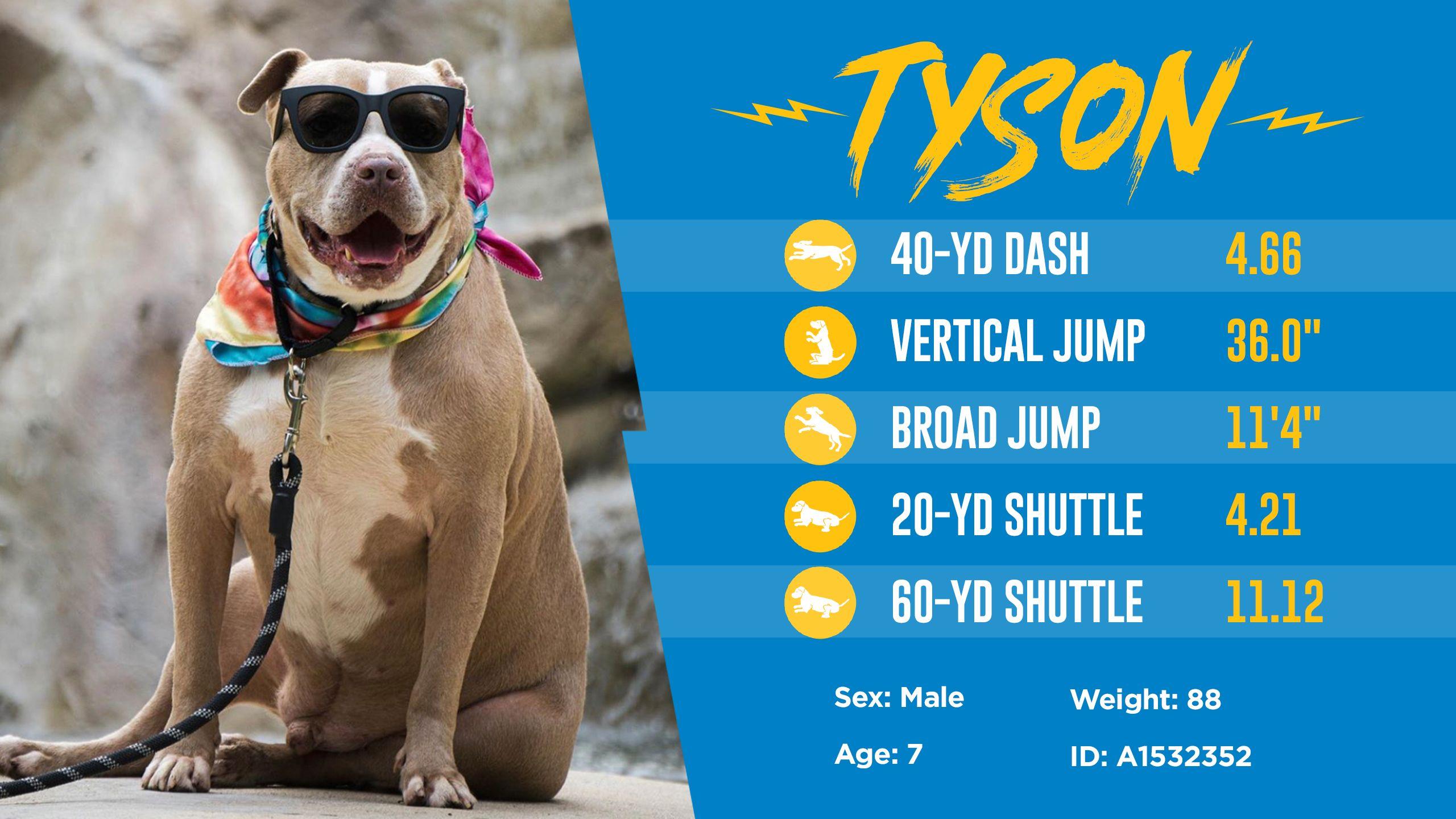 200501_Dog_Draft_Thumbnail_Tyson