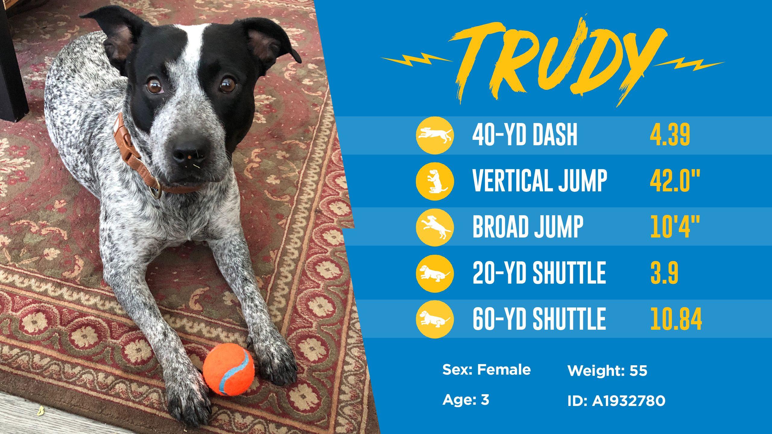 200501_Dog_Draft_Thumbnail_Trudy