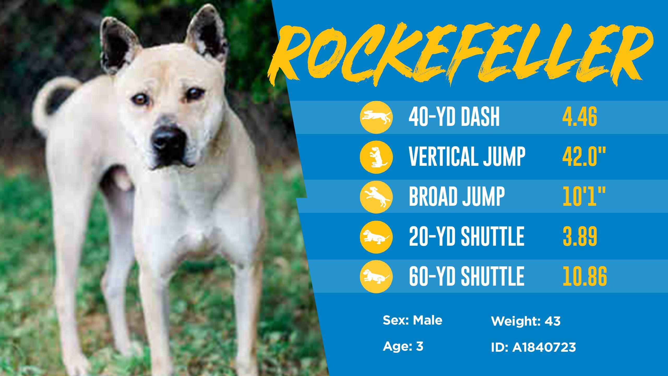 200501_Dog_Draft_Thumbnail_Rockefeller