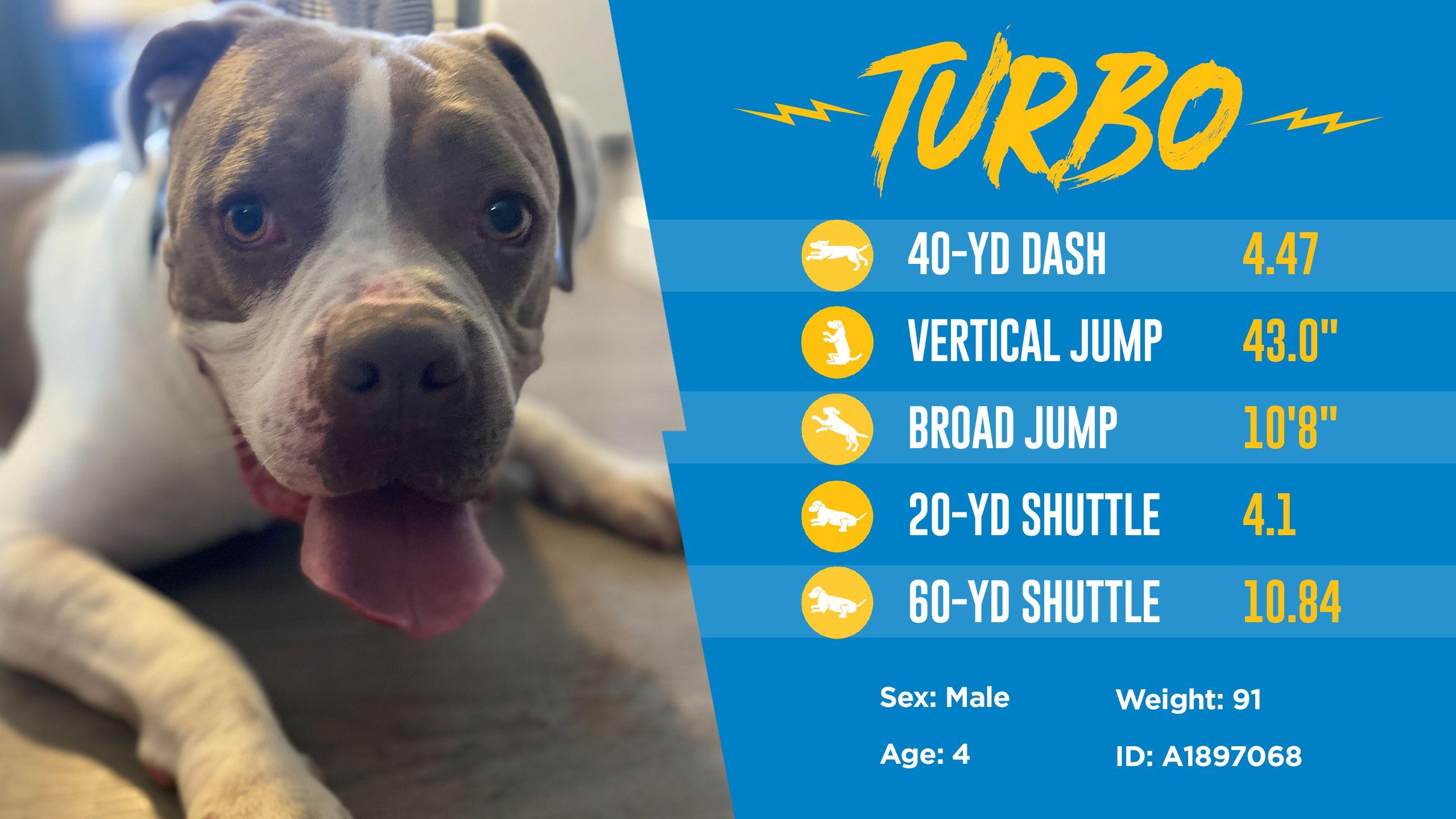 200501_Dog_Draft_Thumbnail_Turbo