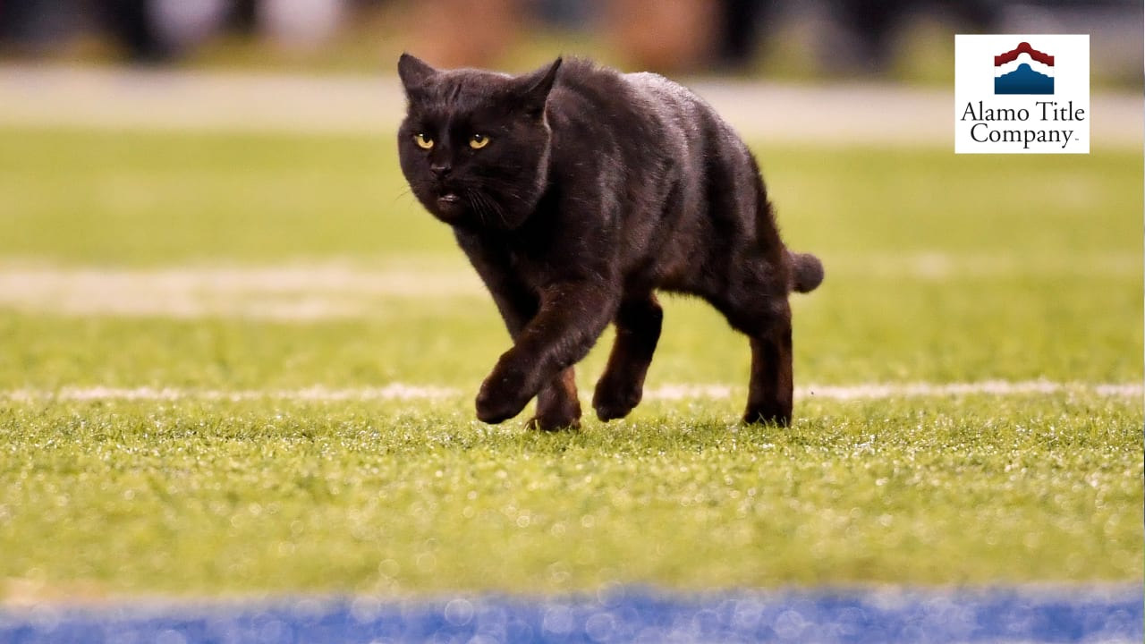 Cowbuzz Top Reactions From Black Cat Mnf Debut