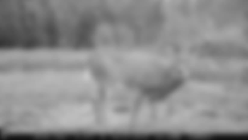 161116-trail-cam-950.jpg