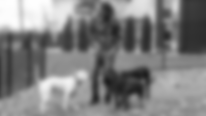 Purple Pups Photos: Trae, Apollo, Ares and Roma Waynes
