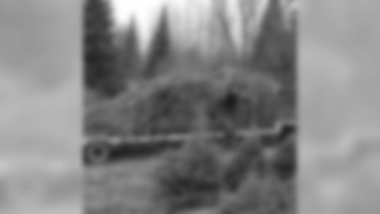 40-Foot Balsam Fir Tree