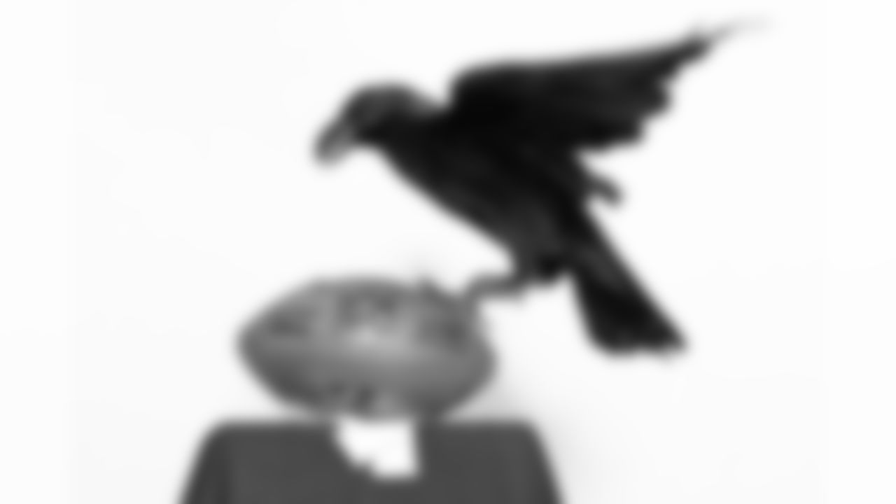 A live raven came to visit the Owings Mills Practice Facility for a photo shoot.